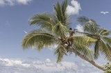 palmtree_1