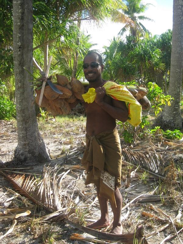 Harvesting coconuts