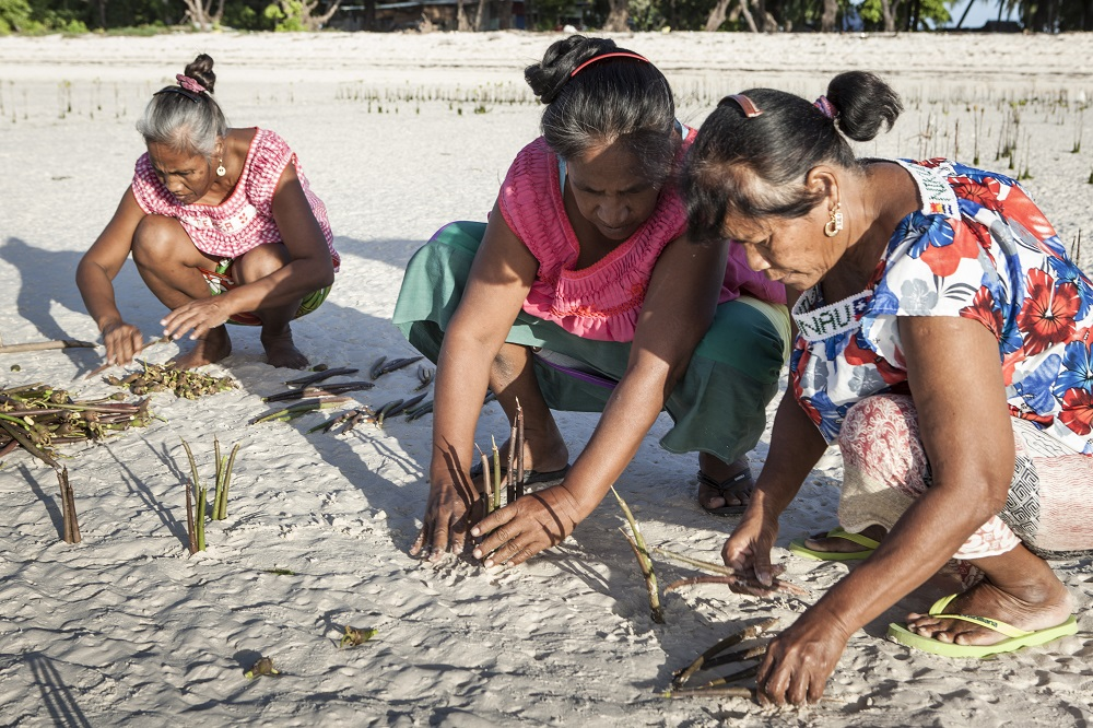 Frauen pflanzen Mangroven 2