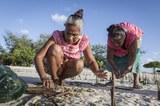 Frauen pflanzen Mangroven