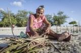 frau_mangroven