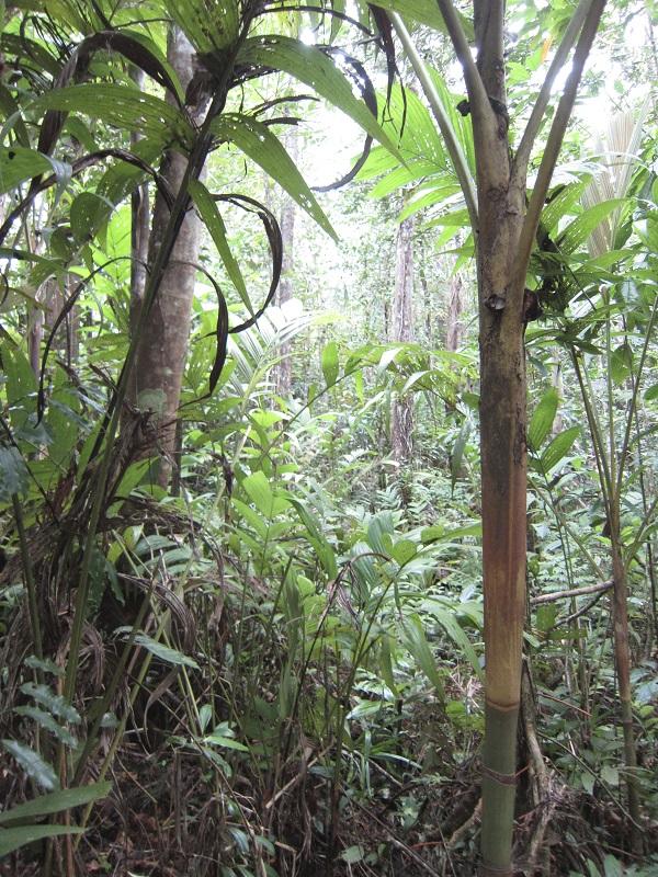 Rainforest close to Suva
