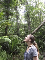 Rainforest close to Suva